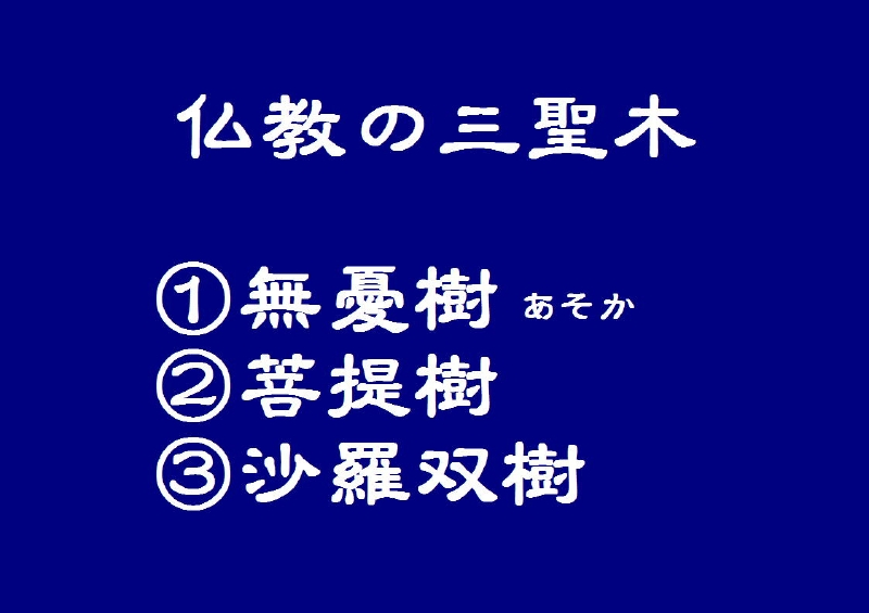 a-008三大聖木