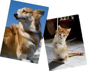 犬猫の写真